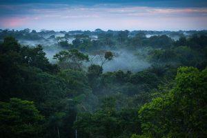 Brazilian Amazon Rainforest