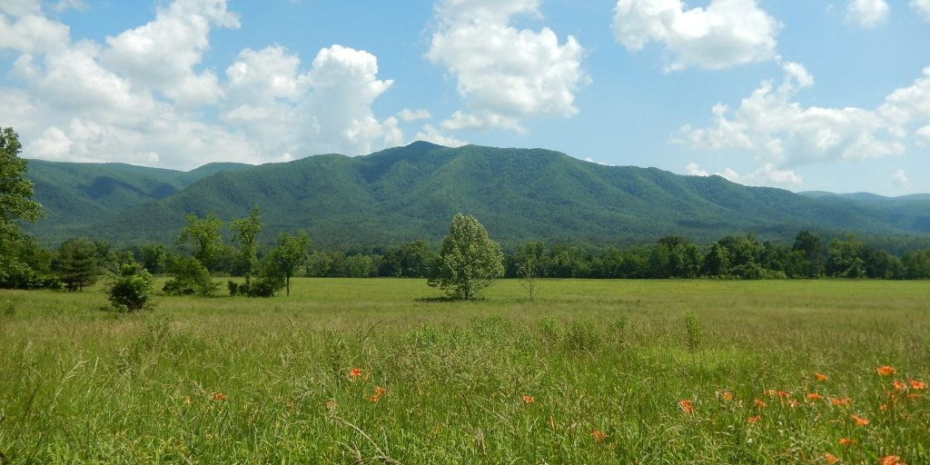 Great Smoky Mountains National Park, United States field with orange lilies at the foot of the mountains in Cades Cove