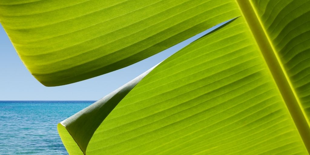 A leaf and the ocean