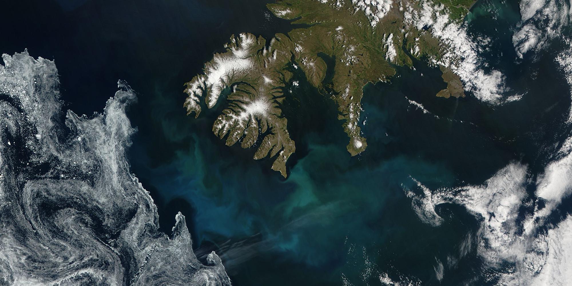 Phytoplankton bloom off Iceland