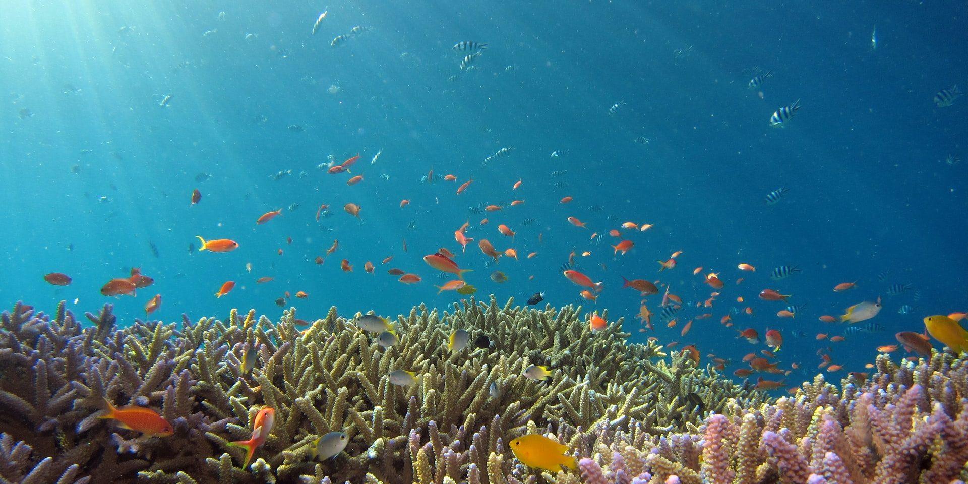 Beautiful reef and orange fish in Okinawa sea.
