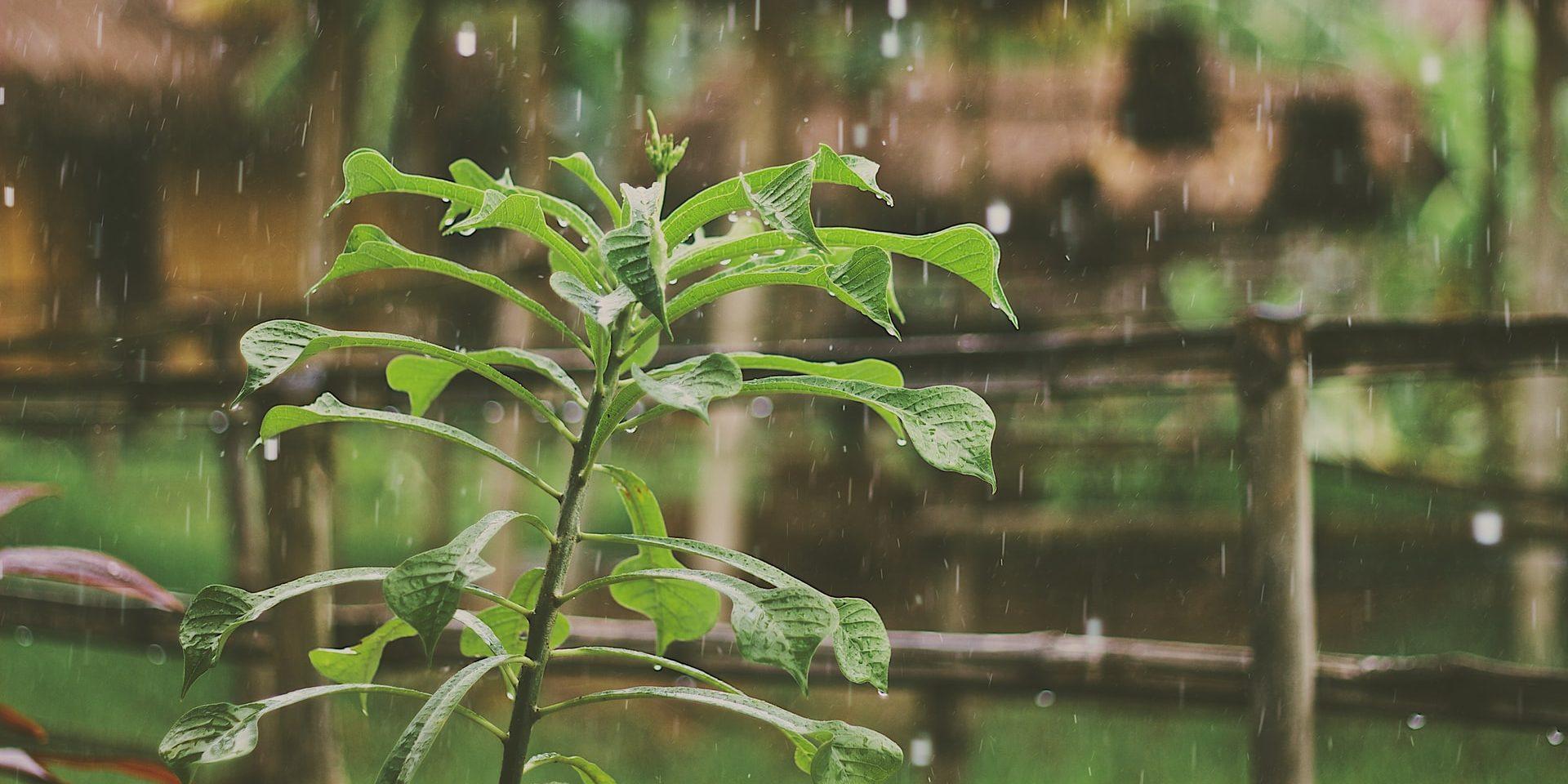 Raindrops on a plant