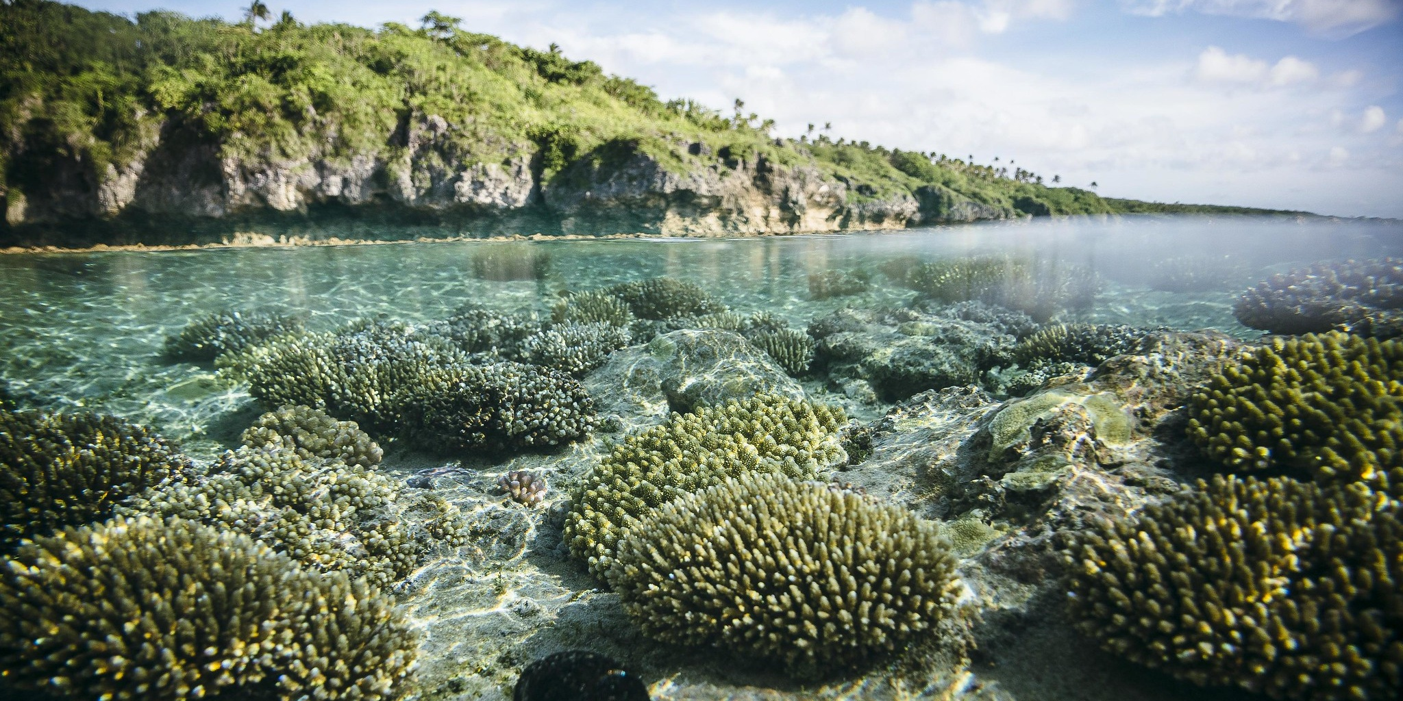 coral and land biodiversity