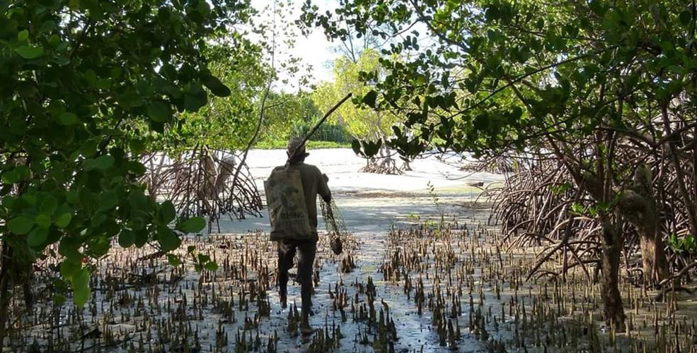 A-fisherman-in-a-mangrove-forest-on-the-coast-line-of-southern-Kenya