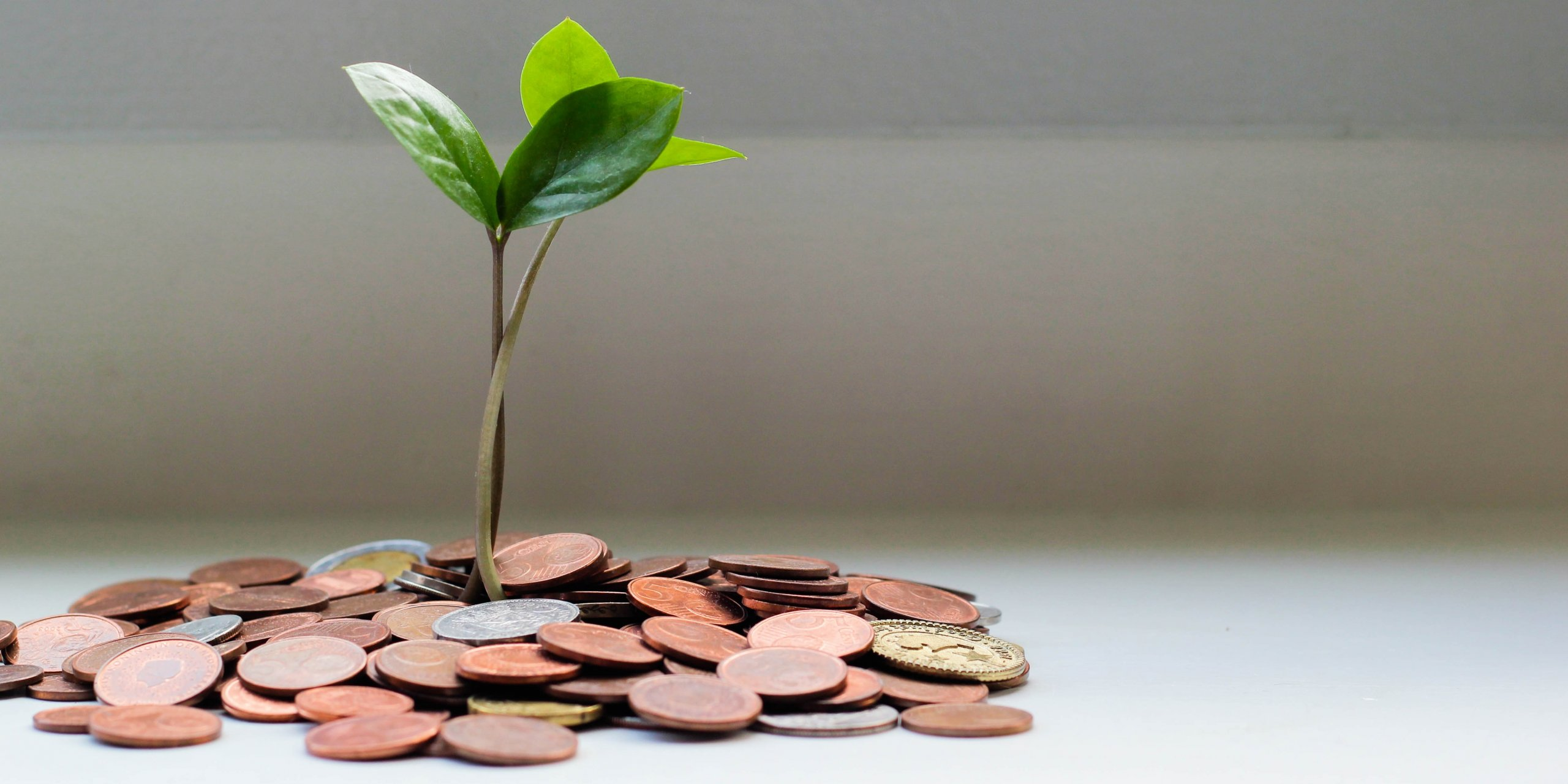 sapling and coins