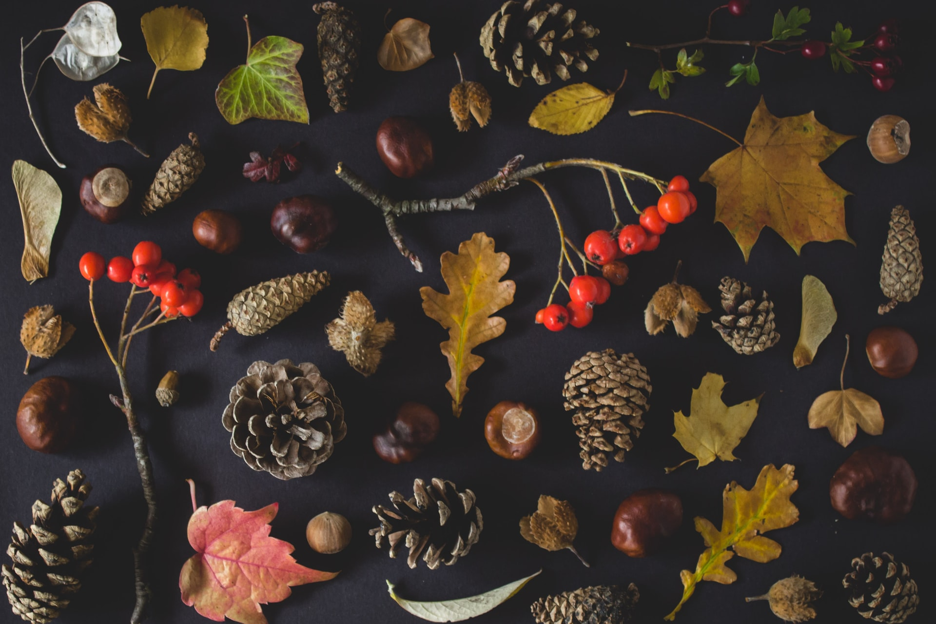 Small collection of autumnal gems
