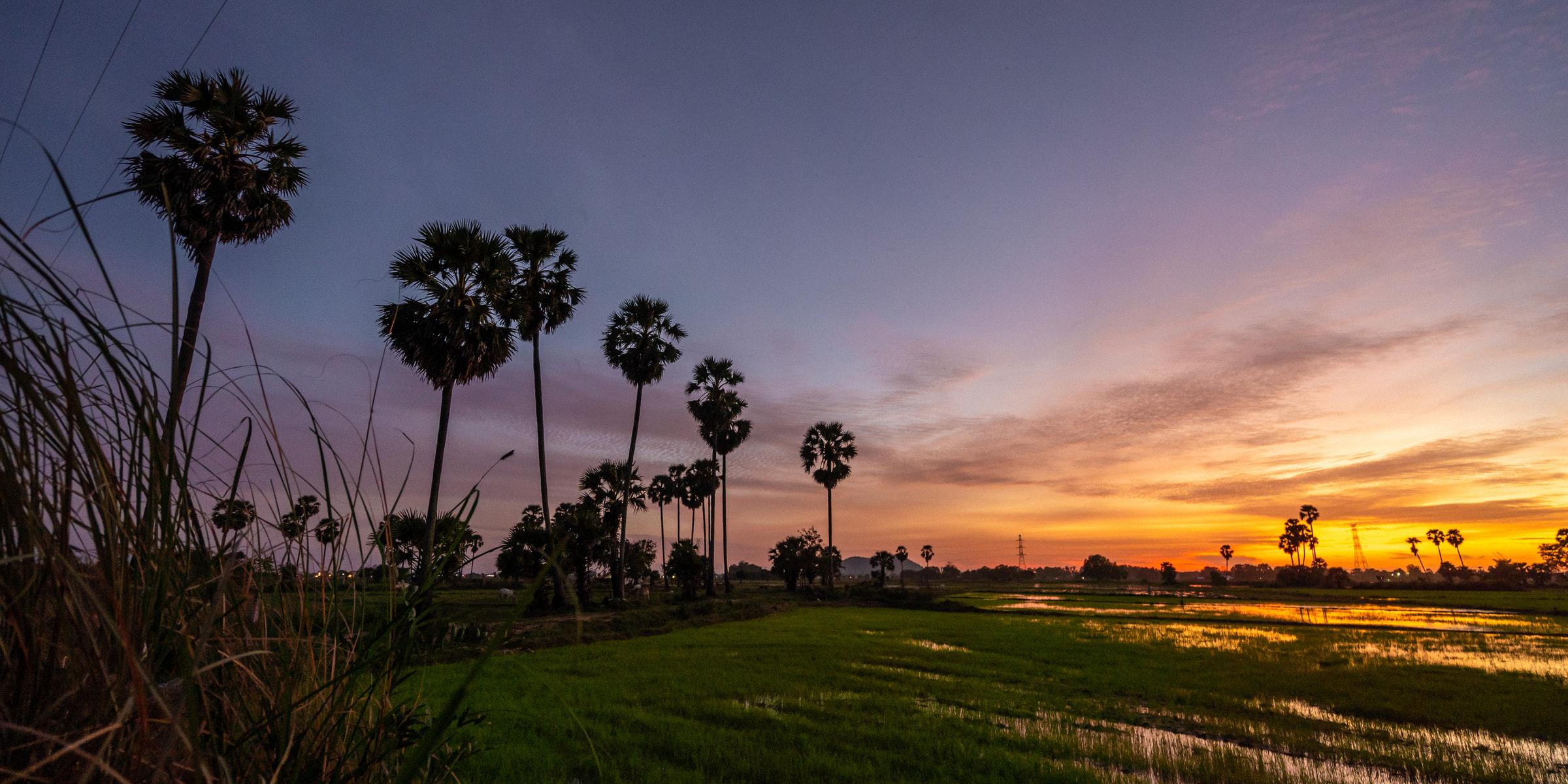 Cambodia field
